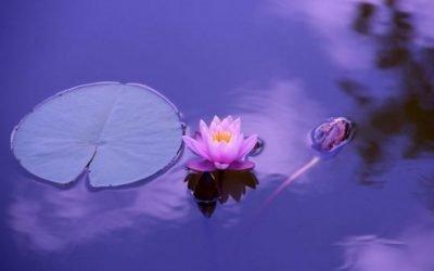 Autocompassione, che cos'é e come migliorarla